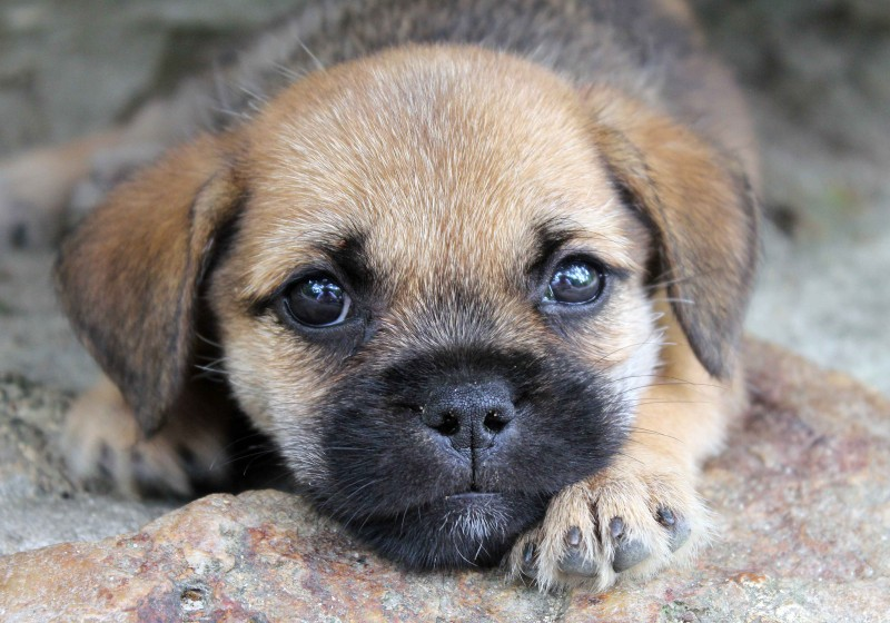 Puppy with cute eyes