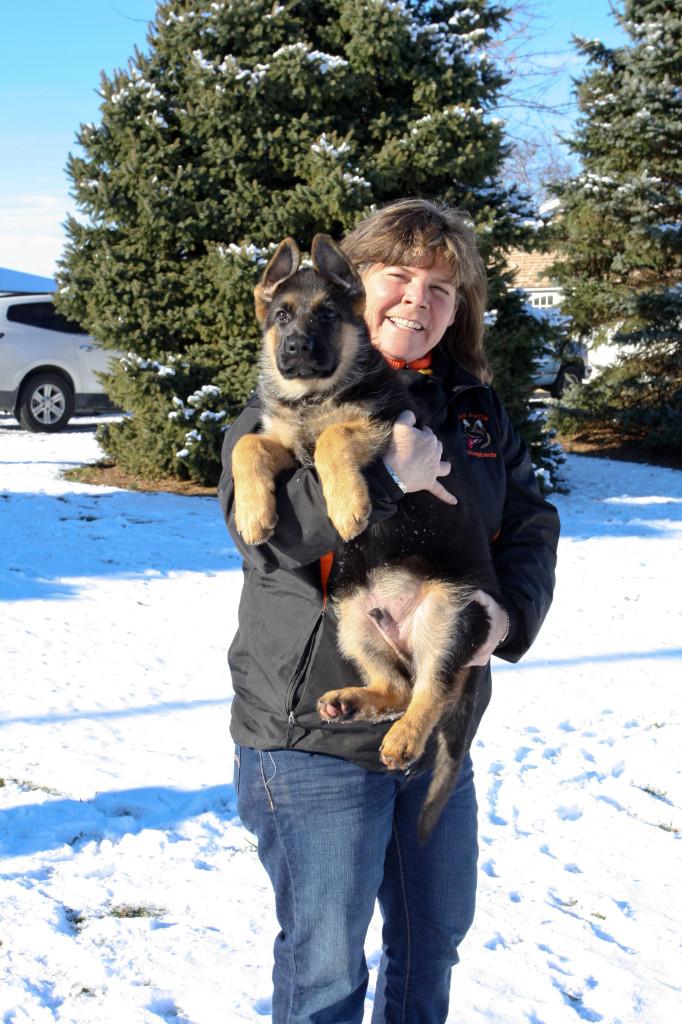Megan Judge breeds top-quality German Shepherds at her Nokesville kennel, Haus Juris German Shepherds.