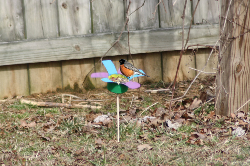 """Decorative tin """"flower"""" bird feeders are a fun craft project that the entire family can enjoy. They're also easy to make and inexpensive."""