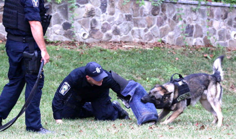 police dogs 55