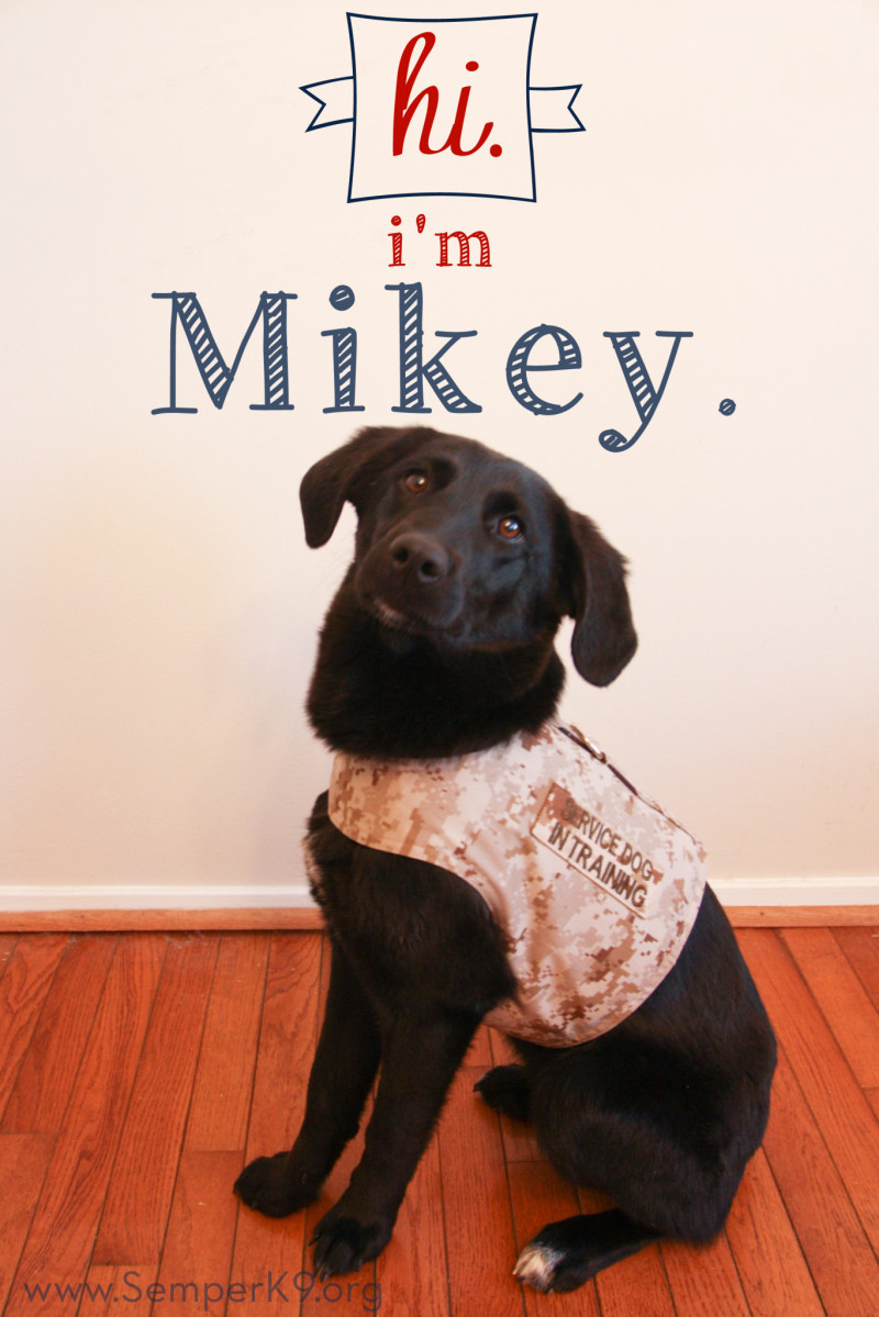 Semper K9s Mikey Photo copy