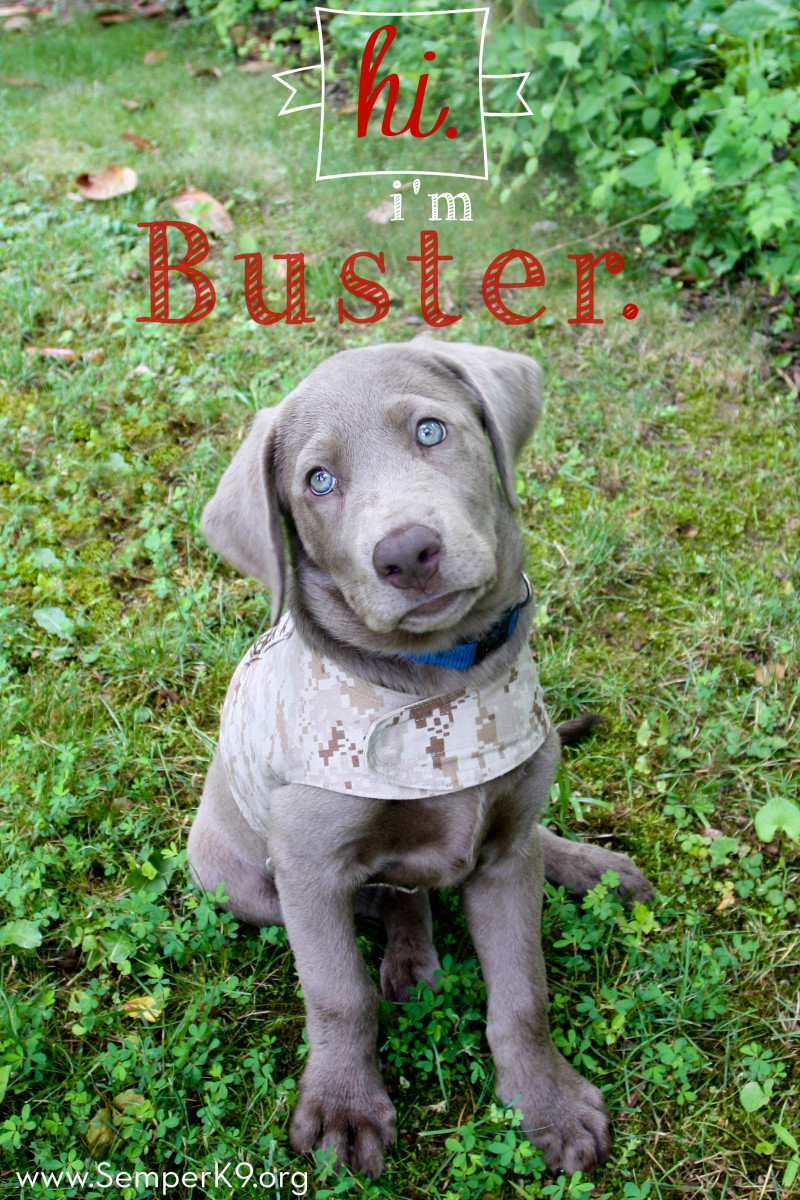 Semper K9s Buster Photo copy