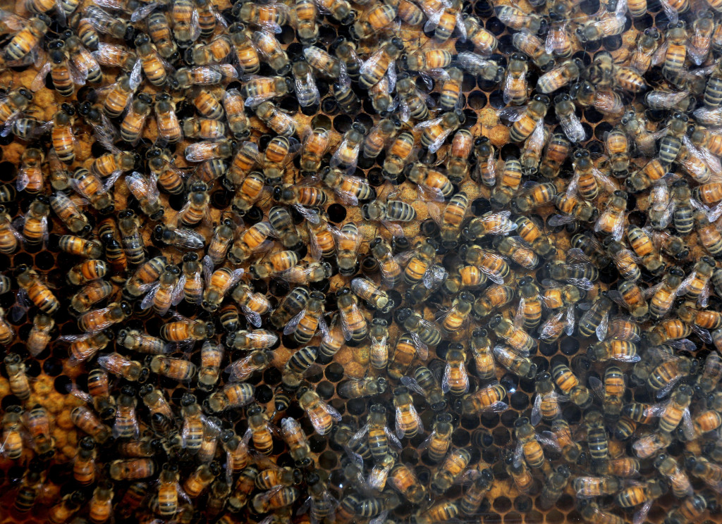 rippon bees 57