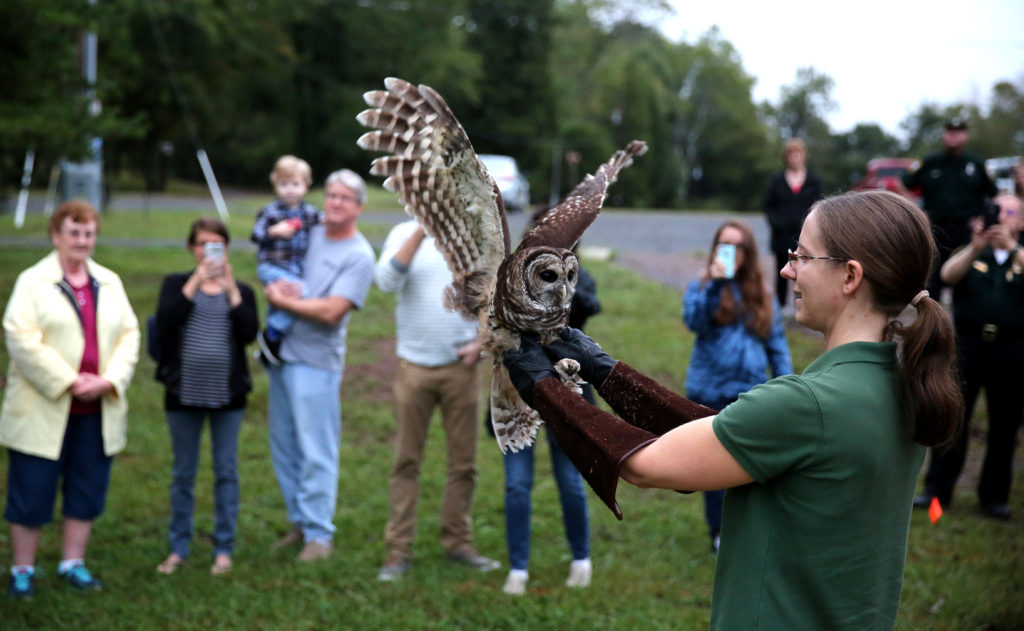 Gabby Hrycyshyn, the executive director of the Raptor Conservancy of Virginia, prepares to release a rehabilitated barred owl Saturday at Silver Lake Regional Park. The owl was found with an broken wing off Vint Hill Road in Prince William County