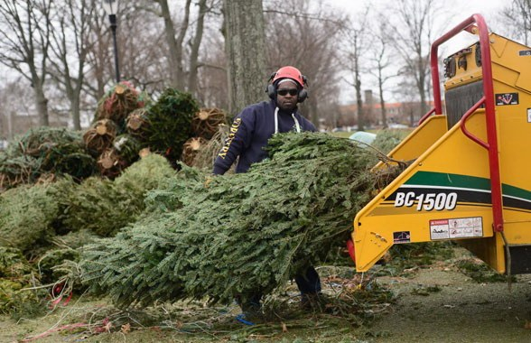 christmas-tree-grinding