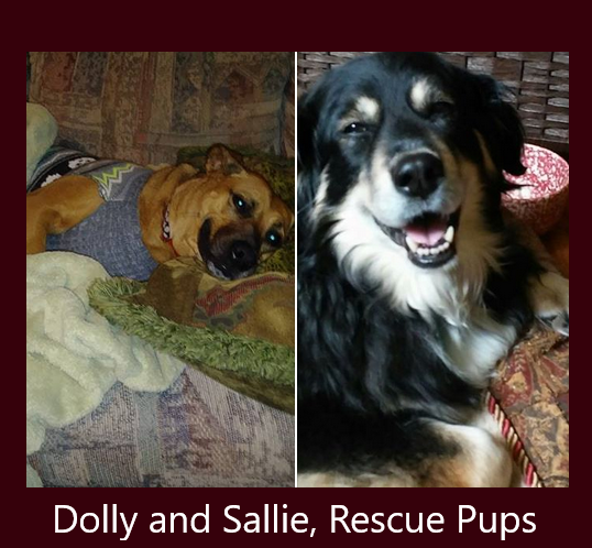 Dolly and Sallie Rescue Pups for Pick a Pet Pic Contest