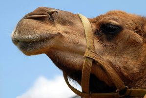 Hump Day Local Events Manassas Prince William