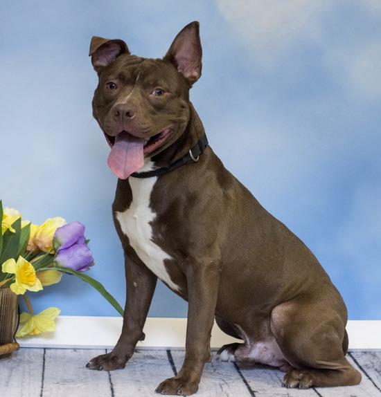 Prince william humane society shelter dog jasper
