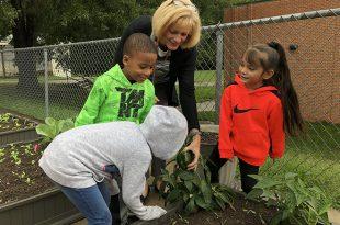 Minnieville Elementary School, PWCS, gardening, kindergartners